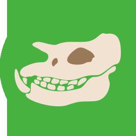 GFSMcirlcegreen